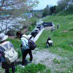 つくし、ちょうちょう、シロツメクサ…いろいろな春を探しに。 春の押し花づくり(4月第2回)