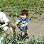 こんな大きいの取れたよ!!「野菜収穫」(5月第3回)